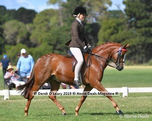 """Reserve Champion Open Small Saddle Pony """"DP Gigolo"""" ridden by Daizi Plumb, exhibited by Dale Plumb"""