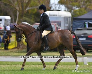 """""""Wynara Dreamboy"""" was in the Top Ten in the Show Hunter Small Galloway, ridden and exhibited by Raelene Brown"""