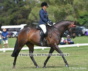 """""""Inafrenzy"""" ridden and exhibited by Katie Ramsay in the Open Large Saddle Hack, plkace in the the Top Ten"""