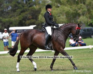 """""""High Fashion"""" ridden and exhibited by Syenna Vasilopoulos, Top Ten in the Open Large Saddle Hack Class"""