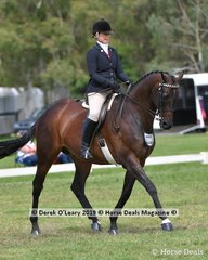 """""""DP Amazing"""" Top Ten in the Open Large Saddle Hack ridden and exhibited by Michelle Paynter"""