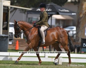 """""""Warranwood Perfect Harmony"""" went Top Ten in the Large Show Hunter Galloway, ridden by Ella Doery, exhibited by Suzanne Addison"""