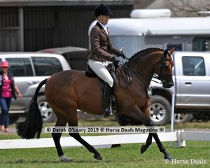 """Champion Large Show Hunter Galloway, """"Beauparc Dreams"""" ridden by Sarah McMaster and exhibited by Adelaide Jacobs"""