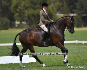 """Reserve Champion Show Hunter Small Hack, """"AKS Rumor Has It"""" ridden and exhibited by Abby Heffer"""