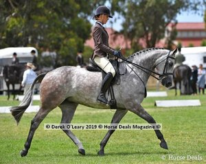 """""""Regal Jive FF """" went Top Ten in the Show Hunter Small Hack, ridden by Megan Cheeseman, and exhibited by Kate Dertell, Future Farms"""