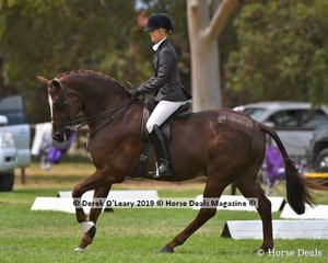 """Champion Show Hunter Small Hack """"SLM Valentino"""" ridden and exhibited by Brynie Lee"""