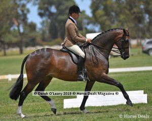 """Reserve Champion Show Hunter Large Hack, """"ETP La Scala"""" ridden by Greg Mickan exhibited by Terry Van Heythuysen"""
