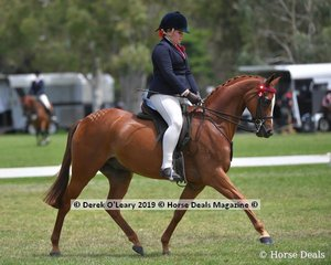 """""""Monrose Park Music Man"""", Top Ten in the Open Small Saddle Galloway, ridden by Holly Dalgleish, exhibited by Jodi Monro-Dalgleish"""