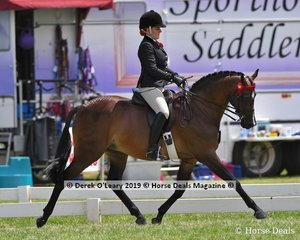 """Champion Open Small Saddle Galloway """"Monument Park Superstar"""" ridden by Briony Randle, exhibited by Emily Murray"""