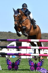 Olympian and international eventing rider, Amanda Ross rode, 'Co Pilot' to eighth place in the strong Horseware Australia CSI*  jumping class.