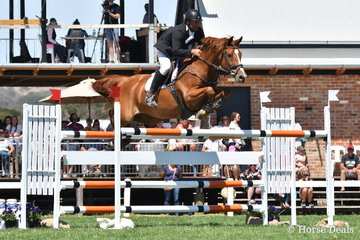 Russell Morrison back in the World Cup class after a few years jumped a promising round aboard his 'CE (Chuggy Equestrian) Cajun' and is pictured during round one of the Robertson-Smith Partners Equine Vets World Cup Qualifier.