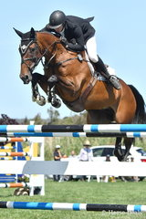 Current 2018/2019 Australian World Cup League leader, Aaron Hadlow is pictured aboard his talented mare, 'Vahlinvader' (Valhalla/Brilliant Invader mare) that took sixth place in the Robertson-Smith Partners Equine Vets World Cup Qualifier. The final World Cup qualifier for this season is being held next weekend at Sale.