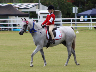 Ally Hayes from Grafton in Zone 15 winning the Best Educated Pony Hack