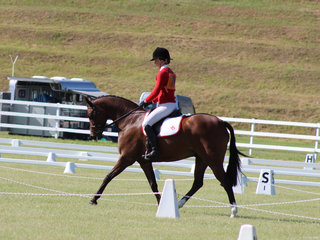 Charlee Anthony from Murwillumbah Pony Club in Zone 15 placed 4th in the Novice 2:3