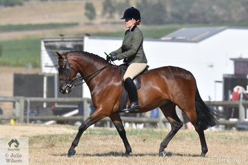 Briony Randel rode Sandra Donovan's. 'Astral High Society' to win the Ring 2 class for Show Hunter Galloway 14-14.2hh.