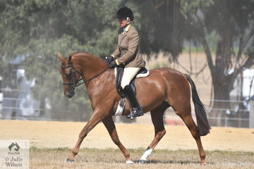Very successful showing exhibitor, Shelley Penny rode her, 'Sheldene Zareem' to take second place in the Ring 2 class for Lightweight Show Hunter Galloway.