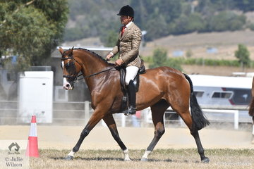 Clint Bilson rode, 'Lois Lane' to take third place in the Ring 2 class for Show Hunter Hack 15-16hh.