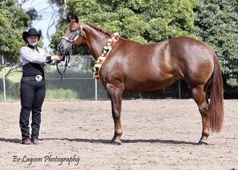 CHAMPION QUARTER HORSE MARE BM INTENTIONAL , SHOWN BY HELEN BARNES