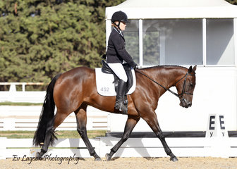 GF CATTLE CAMP KID COMPETING IN THE AMATEUR DRESSAGE RIDDEN BY AIMI HOLMES