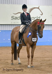 HL THEODORE RIDDEN BY CHANELLE HUNTER-COOKE IN THE RIDDEN HACK 15HH AND OVER.