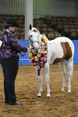 BRIGHTBROOK SPOOKTACULAR, CHAMPION PAINT COLT WITH LEE-ANN SHELTON