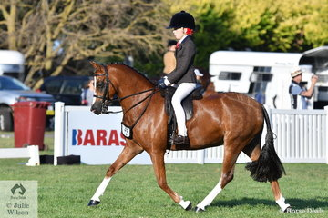 Jessica Sharp rode her 'Imperial Vagabond' to make Top Ten in the Child's Medium Show Hunter Pony Championship.