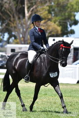 Chanele Hunter rode  Lyn Warburton's, 'Daisy Patch Soul Star' to take out the 2019 Barastoc Small Galloway Reserve Championship.