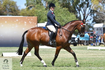 Nicole Toll made Top Ten in the 2019 Barastoc Small Hack Championship with her, 'Lyndam Park Armani'.
