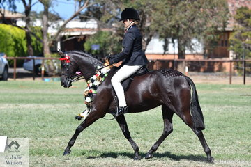 Lynda Hayes has done all the work and it paid off today when she rode Vicki Pisciotta's, 'Wide Acre Black Diamond' to take out the Barastoc 50th Anniversary Celebration Show Large Pony Championship.
