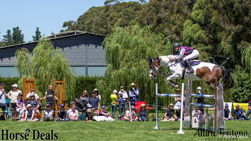 The Eventers vs Showjumpers class is a crowd favourite! Pictured is the winner of the class, Sophie Hatch riding Glenara Mudslide.