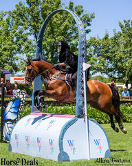 What looks to be Soigne Jackson riding Warrego Collateral Damage jumping the Wallaby Hill Farm hand bag.