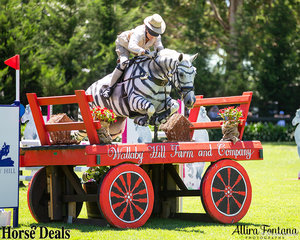Since when were Zebra's allowed to compete? It's ok Kirsty Douglas and Cushavon Crackerjack, we will let this one slide.