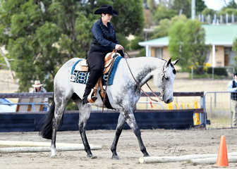 CHOCOLATE CRUISER RIDDEN BY TERESA ROBINSON IN THE TRAIL CLASS