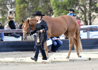 CLAIRVAUX PLAYIN TO SCORE SHOWN BY JACKIE HOBDEN IN YEARLING LED TRAIL