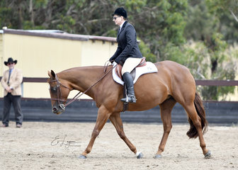 RED HOT RHYTHM RIDDEN BY JACKIE BECKER IN HUNT SEAT EQUITATION