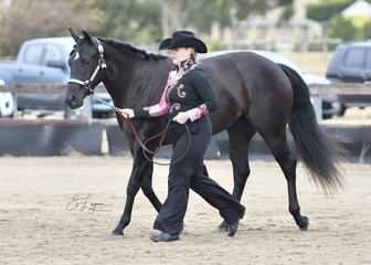 TPL SECRET SEDUCTION SHOWN BY ANGELA ROBERTSON IN THE YEARLING VERSATILITY EVENTS