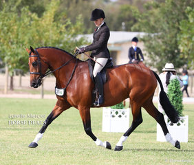 """Champion Newcomer Show Hunter Hack  """"Equella Florentine"""" exhibited by Grace Imrie."""