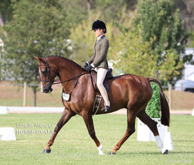 """""""JC Just Dolce"""" placed Top 5 in the Newcomer Show Hunter Hack class, exhibited by Laura and Jodie Dobson."""