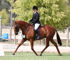 """""""DP Ignite"""" exhibited by Kara Woolcock works out in the Preliminary Show Hack over 15hh class."""