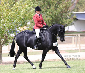 """Tracie-Lee Wells riding """"Wangilla Costar"""" who was Reserve Champion Newcomer Show Hunter & Top 5 Preliminary Show Hunter Hack over 15hh."""