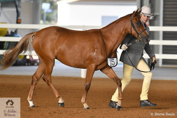 Jennifer Emmanual presented her Cannibal Creek Windras Gift to take third place in the class for Yearling Female.