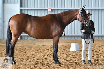 Abbie Hansen is pictured with her 2 Year Old Led Filly, 'Alinta Amhain' during the led judging this morning.