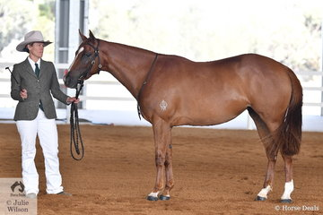 Colleen Page is pictured with her Champion Led Three Year Old, the filly, 'Oakton Lodge Shooting Star'.