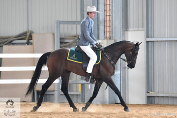 Early today, Brad Daunt took out the led Two Year Old Reserve Championship with his typey, 'Notus Northern Icon' and later in the day the young horse performed very well to win the class for Two Year old Hack.