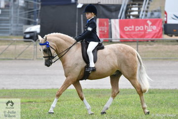 Experienced showring performer, Chase Jackson from Queensland won the class for Boy Rider 7 AU 9 years and went on to be declared Champion Junoir Boy Rider.