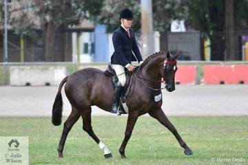 Michael Christie rode Joh Bailey's, 'Arpels' to take second place in the class for Novice Hack 15.2-16hh.