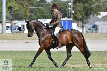 Successful showing and dressage rider, Mark Kiddle rode the M and M Performance Horses, Pavia Family ans  Kay and Samsa nomination, 'Melva Park Royalty' to take second place in the class for Novice Show Hunter 15-16hh.