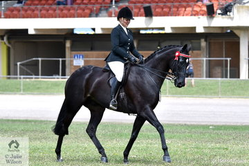 The novice hack work outs surprisingly had a lot of sitting trot. When sitting trot was asked for, popular South Australian rider, Samantha Kennedy gave the best demonstration. She produced a lovely workout riding the Kennedy and Rice nomination, 'Bugatti' to work her way into second place in the class for Novice Hack 16-16.2hh.