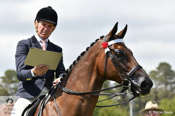 """""""You want me to go where""""? Mark Kenzig studies the Novice Over 16.2hh Hack workout. He obviously got it right, as he rode the Kenzig and Anderson nomination, 'Tanjil' to win it."""