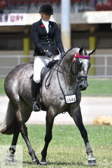 Successful and keen showing exhibitor, Melissa Oven, rode her former racehorse, 'Lazer Envy' to take second place in the class for Novice Hack Over 16.2hh.